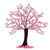 Cherry tree. Illustration of many cherry blosoms on a tree Royalty Free Stock Photo
