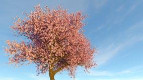 Cherry Tree Fotografie Stock