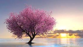 Cherry Tree Immagini Stock