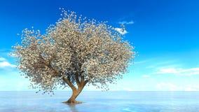 Cherry Tree Immagine Stock