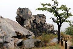 Cherry Tree au mur Teufelsmauer de ` de diables en montagnes de Harz Photographie stock