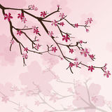 Cherry tree background Royalty Free Stock Image