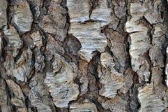 Cherry Tree Bark negro Imagenes de archivo