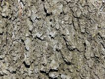 Cherry tree bark texture Stock Photos