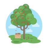 cherry tree. Royalty Free Stock Photo