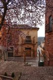 Cherry tree in bloom in a town square in Alcaraz. Beautiful pink cherry tree in bloom in a town square in Alcaraz in spring. Old and antique facades and stone Stock Photos