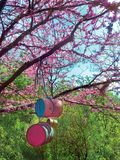 Cherry tree blooms with pink flowers in the spring botanical garden and bird feeders from recycled cans. Japanese cherry tree blooms with pink flowers in the royalty free stock image
