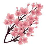 Cherry tree blossom.Hand drawn vector illustration. Isolated elements. Stock Images