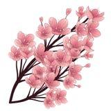 Cherry Tree Blossom Hand getrokken vectorillustratie Witte achtergrond Stock Afbeeldingen