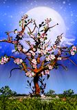 Cherry Tree Blossom and starry night. Illustration vector illustration