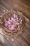 Cherry tree blossoming flowers in straw nest on brown wooden background. Easter background with a nest with sakura spring flowers. Rustic wooden background for stock photo