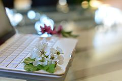 Cherry tree blossoms on white keyboard. Spring in office stock photo