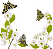 Cherry tree branch with yellow butterflies Stock Images