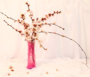 Cherry-tree branches Stock Image
