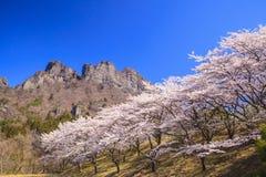 Cherry tree and Crag Mountain Royalty Free Stock Photo