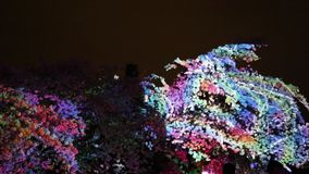 Cherry tree crown illuminated night. Magical cherry tree animation light show stock footage