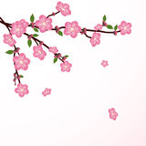 Cherry tree flower Stock Photo