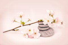 Cherry tree flower branch and pebbles, zen composition. Cherry tree flower branch and pebbles, zen floral composition Royalty Free Stock Images