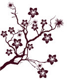 Cherry tree flowers. Illustration with cherry tree flowers silhouette Stock Photo