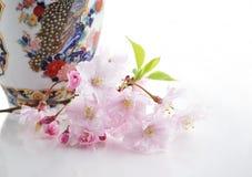 Cherry tree flowers Stock Image