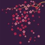 Cherry Tree Flowers Immagini Stock Libere da Diritti