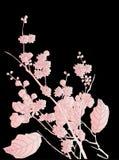 Cherry tree flowers on black Stock Image