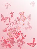 Cherry tree flowers and butterflies on pink Royalty Free Stock Images