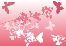 Cherry tree flowers and pink butterflies Stock Images