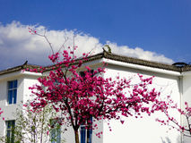 A cherry tree in the front of a house Stock Images