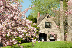 Cherry tree in front of upscale family house Royalty Free Stock Photos