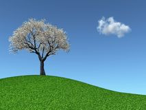 Cherry Tree on a grassy hill. 3d render of a blossoming Cherry Tree on a grassy hill Stock Photography