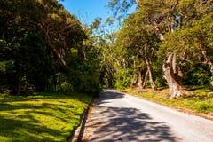 Cherry Tree Hill en populär historisk aveny i norden - östlig del av Barbados, Royaltyfria Bilder