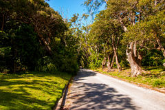 Cherry Tree Hill, a popular historic avenue in the North Eastern part of Barbados, Royalty Free Stock Images