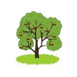 Cherry Tree Icon Immagine Stock Libera da Diritti