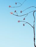 Cherry tree illustration. Asian style Illustration of a cherry tree blooming Stock Photo