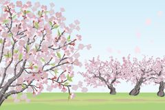 Cherry Tree landscape Royalty Free Stock Images