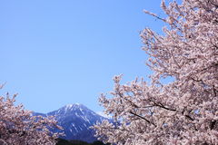 Cherry tree and mountain Stock Photo