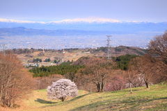 Cherry tree and mountain Royalty Free Stock Image