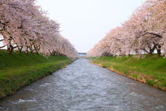 Cherry tree and river Stock Photos