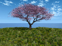 Cherry tree by the sea Royalty Free Stock Photos