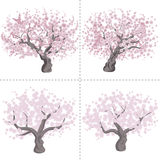 Cherry tree set Royalty Free Stock Photos