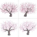 Cherry tree set Royalty Free Stock Photos