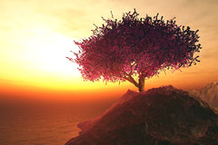 Cherry Tree seul sur des roches de bord de la mer Photos stock