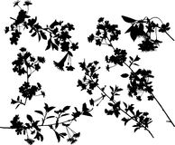Cherry tree silhouette collection Royalty Free Stock Image