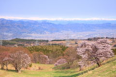 Cherry tree and snowy mountain Stock Photos