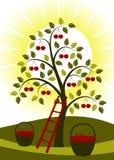 Cherry tree and sun Stock Photo