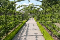 Cherry Tree Walk. Cherry tree pathway in early summer with the fruit trees trained to grow over the arc shaped frame and along the sides Royalty Free Stock Images