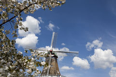 Cherry Tree and Windmill. A white cherry tree, Prunus Serrulata, and an old time windmill with white wind vanes Stock Images