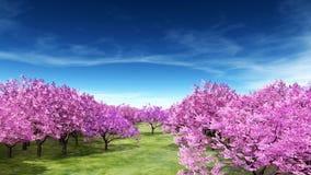 Cherry Trees Royaltyfria Foton