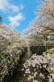 Cherry trees along Meguro River,Meguro-ku,Tokyo,Japan in spring. Stock Images